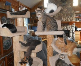 Cat Nap Lodge: A life saving opportunity for stray cats and kittens