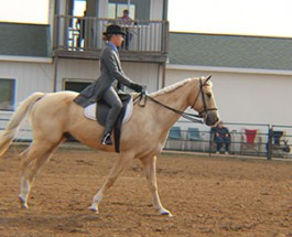 Equestrian Team rides their way to victory